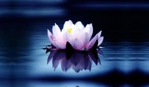 spiritual lotus