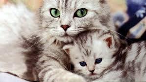 mothercat